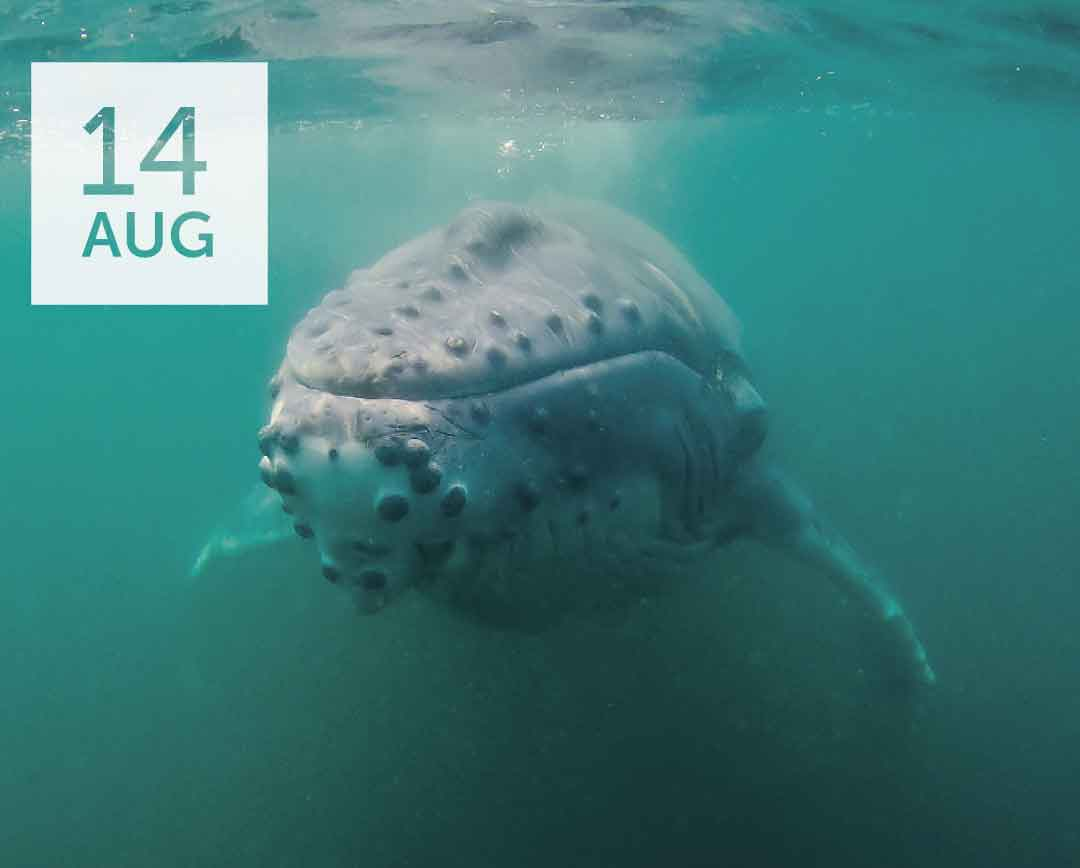 How to Save a Whale in 3 Days