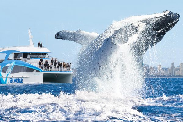 Sea World Whale Watch Header